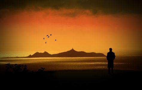 """Guava Island"": A Refreshing Musical Short Film"