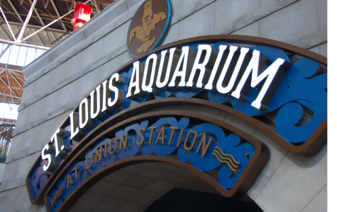 The St. Louis Aquarium is located at Union Station along with the Mirror Maze, Ropes Course, Mini Golf, and Ferris Wheel. It was developed as part of the city's effort to breathe life back into the old train station.
