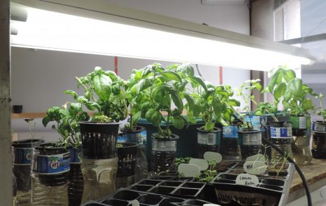 Hydroponic Agriculture Grows at North